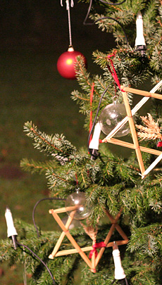 Sch�n gr�n und gleichm�ssig gewachsen soll er sein: Der Weihnachtsbaum, Quelle: Benjamin Krauss