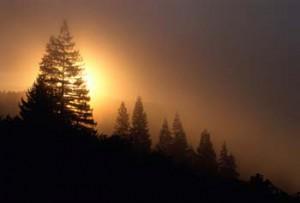 Die Vulkaneifel - Reine Natur