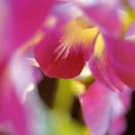 Sri Lanka - Farbenfrohe Flora und Fauna