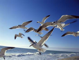 Vögel können Balsam für die Seele sein