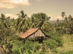 Holzbauten umgeben von tropischem Grün