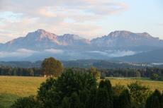 Die Heimat der Zirben sind die Höhenlagen der Alpen