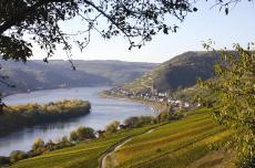 Blick in den Rheingau