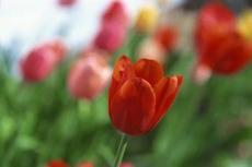 Der Frühling ist wieder da