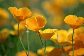 wundervollen Muttertag! Bildhinweis: © beauty24 GmbH