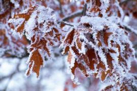 Die Zeit der Weihnachtsmärkte hat begonnen; Bildhinweis: © beauty24 GmbH