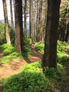 Naturerleben auf dem Harzer-Hexen-Stieg; Quelle: beauty24 GmbH